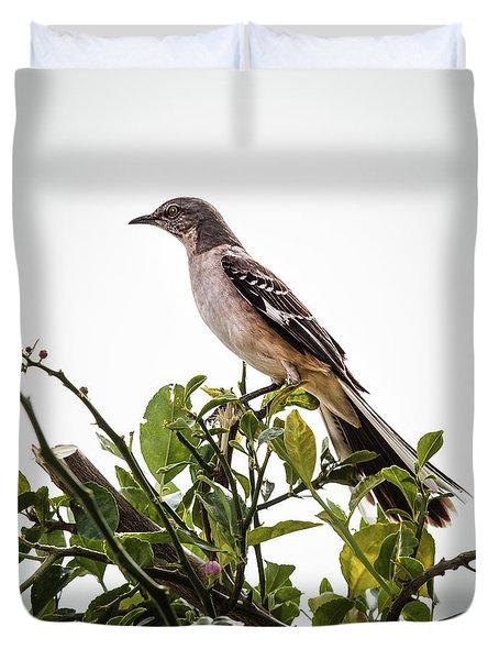 The Northern Mockingbird Duvet Cover