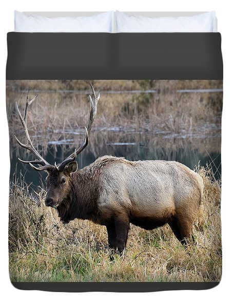 The Old Bull Duvet Cover