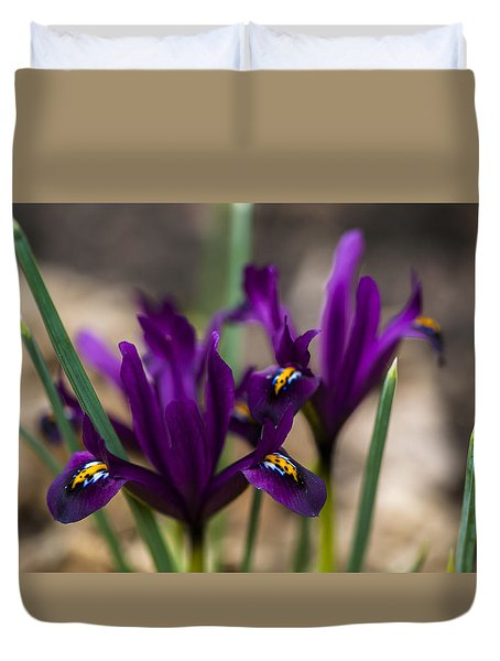 The Rise Of The Early Royal Dwarf Iris Duvet Cover by Dan Hefle