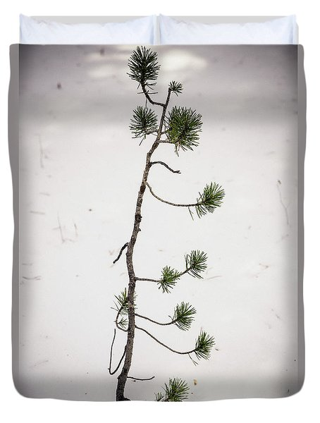 Duvet Cover featuring the photograph The Start Of A Forest Giant by James BO Insogna