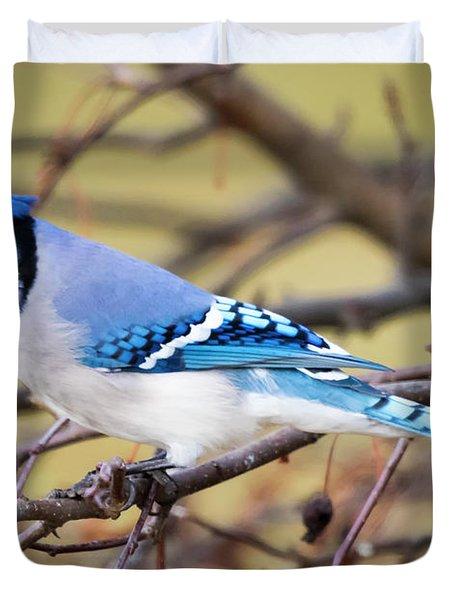 The Winter Blue Jay  Duvet Cover