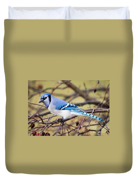 The Winter Blue Jay  Duvet Cover by Ricky L Jones
