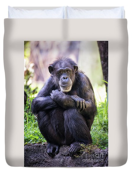 Thoughtful Chimpanzee  Duvet Cover by Stephanie Hayes