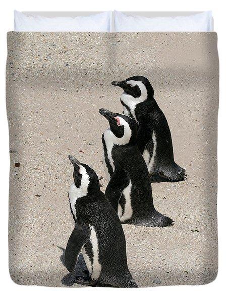 Three African Penguins Duvet Cover
