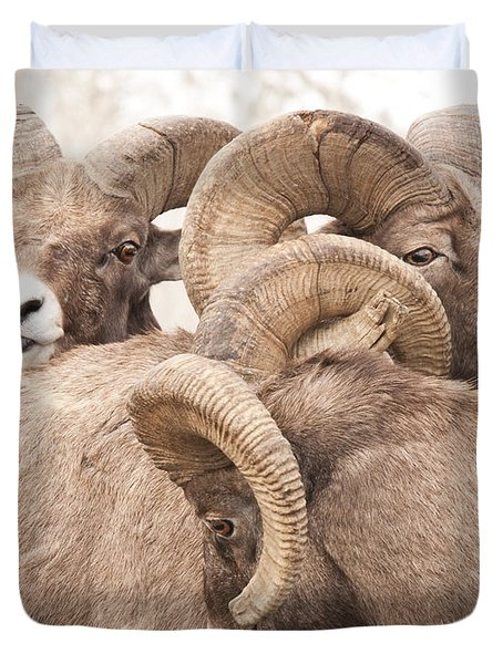 Three Bighorn Rams Duvet Cover