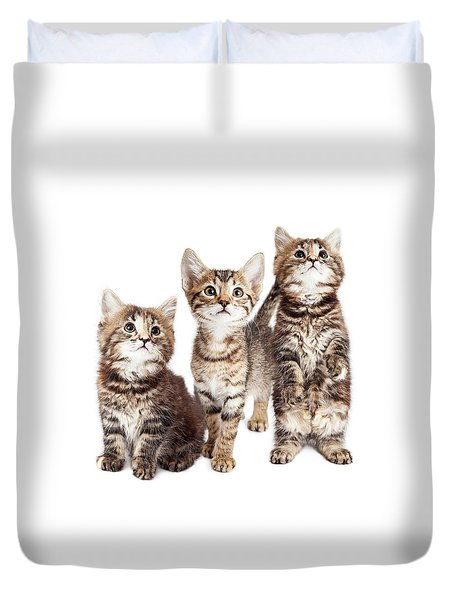 Three Curious Tabby Kittens Together On White Duvet Cover