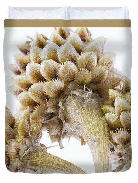 Three Globe Cornflower Seed Heads - Macro Duvet Cover by Sandra Foster