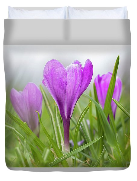 Three Glorious Spring Crocuses Duvet Cover