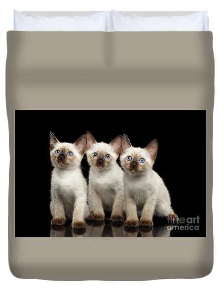 Three Kitty Of Breed Mekong Bobtail On Black Background Duvet Cover by Sergey Taran