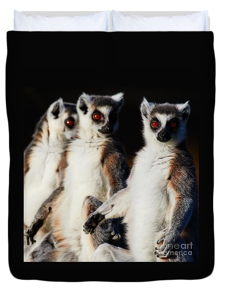 Duvet Cover featuring the photograph Three Ring-tailed Lemurs by Nick Biemans