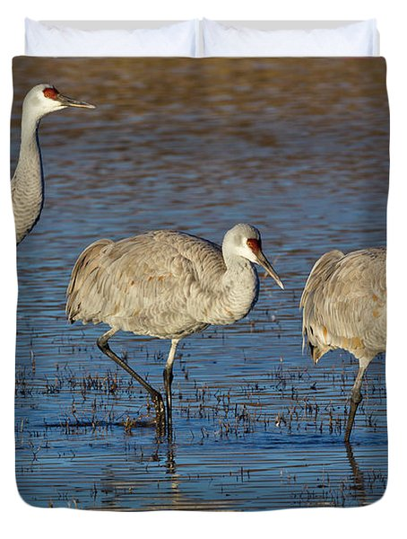 Three Sandhill Cranes Duvet Cover