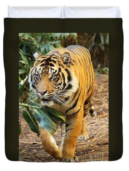 Duvet Cover featuring the photograph Tiger Approaching by Max Allen