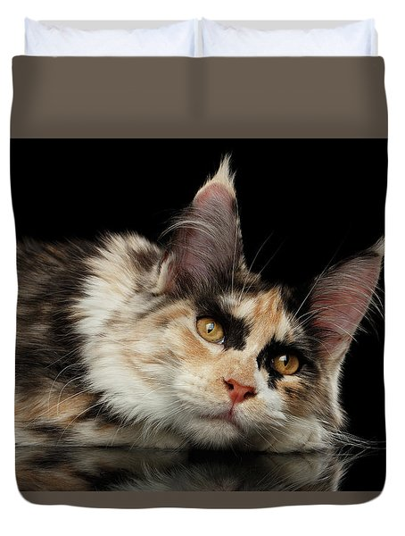 Tired Maine Coon Cat Lie On Black Background Duvet Cover
