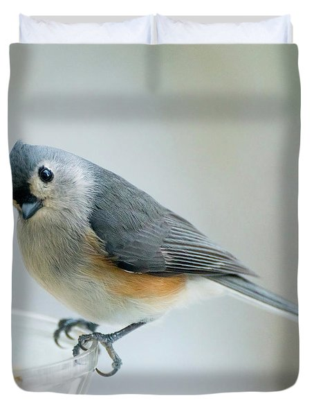 Titmouse With Walnuts Duvet Cover