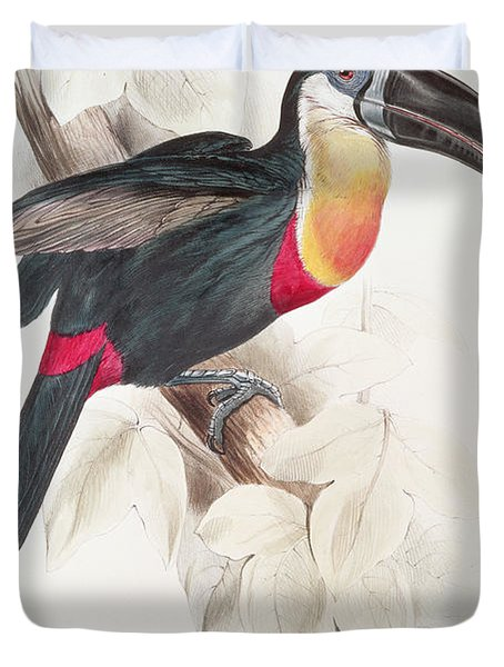 Toucan Duvet Cover by Edward Lear