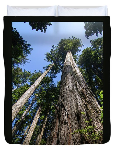 Towering Redwoods Duvet Cover