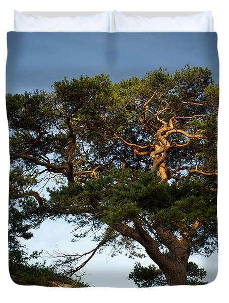 Tree At Maccarthy Mor Castle Duvet Cover by Douglas Barnett