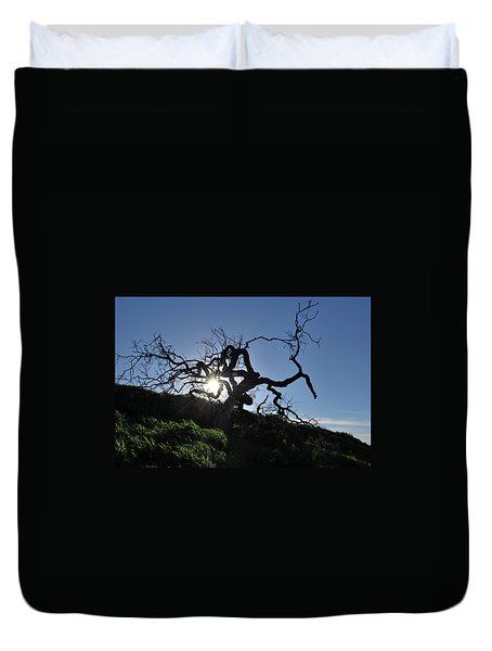 Duvet Cover featuring the photograph Tree Of Light - Sunshine Through Branches by Matt Harang