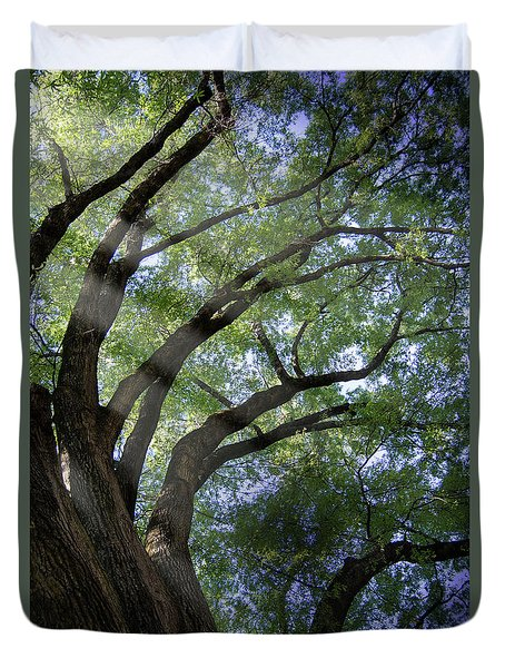 Tree Rays Duvet Cover