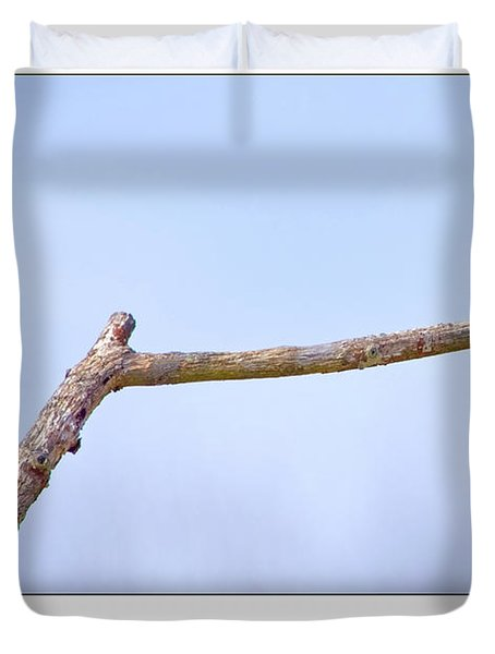 Tree Swallow On Branch Duvet Cover