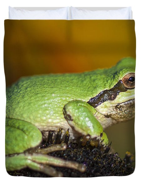 Treefrog On Rudbeckia Duvet Cover