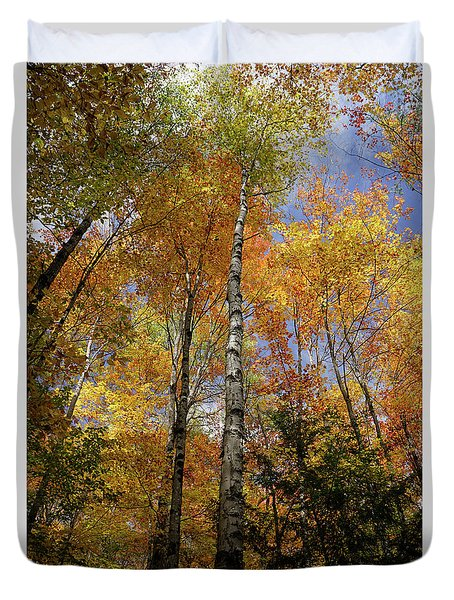 Trees On The Lincoln Woods Trail Duvet Cover by Nancy De Flon