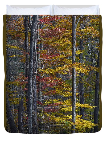 Trees With Autumn Colors 8260c Duvet Cover