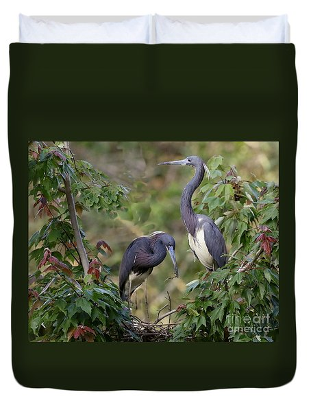 Tri-colored Herons On The Nest Duvet Cover by Myrna Bradshaw