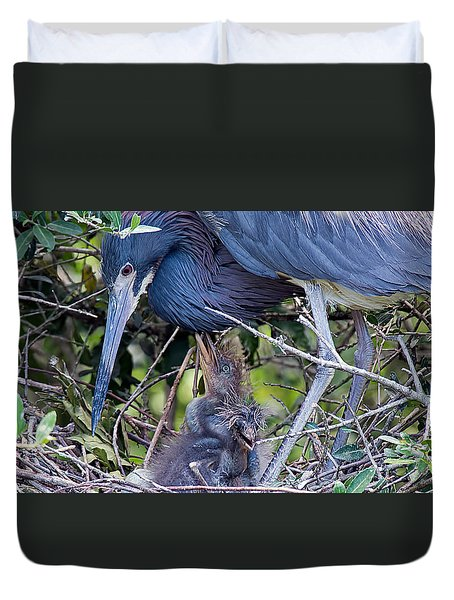 Tricolored Heron Family Duvet Cover by Kenneth Albin