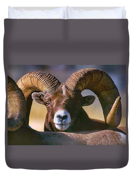 Trophy Bighorn Ram Duvet Cover