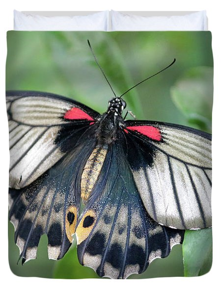 Tropical Butterfly Duvet Cover