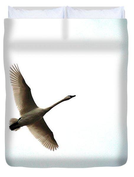 Trumpeter Swan In Flight Duvet Cover