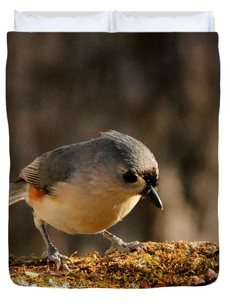 Tufted Titmouse In Fall Duvet Cover