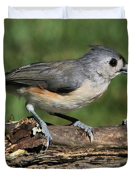 Tufted Titmouse On Tree Branch Duvet Cover