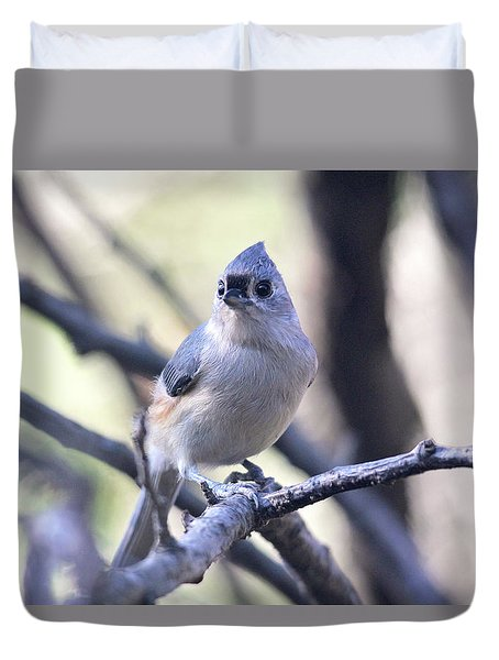 Tufted Titmouse Duvet Cover by Trina Ansel