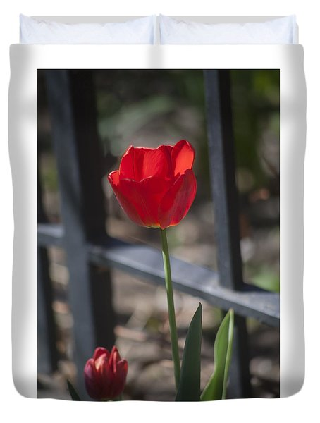 Tulip And Garden Fence Duvet Cover