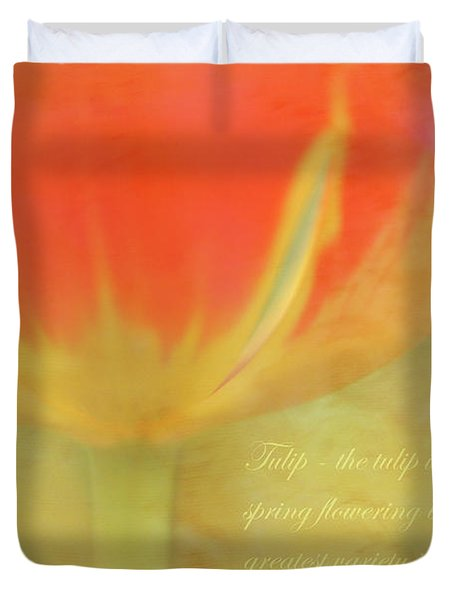 Tulip Duvet Cover by Catherine Alfidi