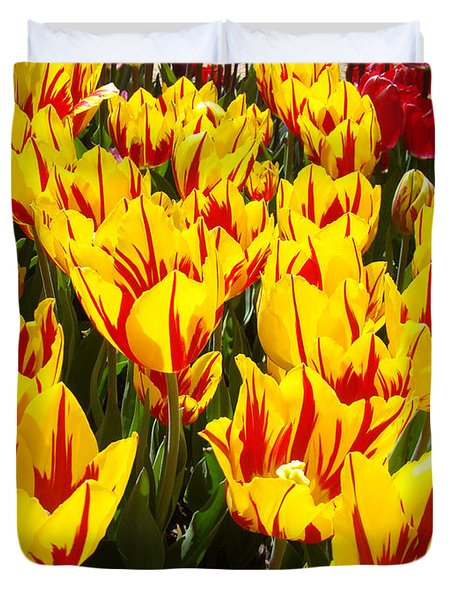 Tulip Flowers Festival Yellow Red Art Prints Tulips Duvet Cover by Baslee Troutman