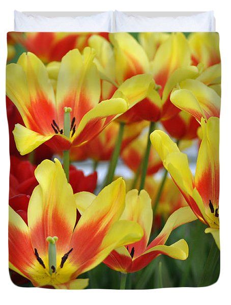 Tulips Glorious Tulip Monsella Duvet Cover by Debra  Miller