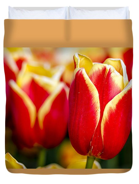 Tulips In The Field Duvet Cover