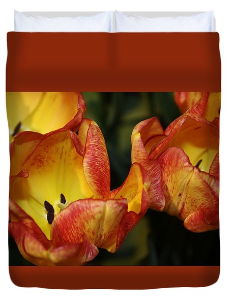 Tulips In The Morning Duvet Cover by Bruce Bley