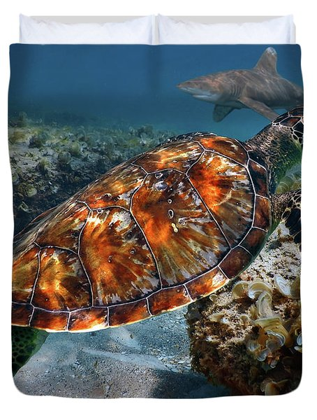 Turtle And Shark Swimming At Ocean Reef Park On Singer Island Florida Duvet Cover