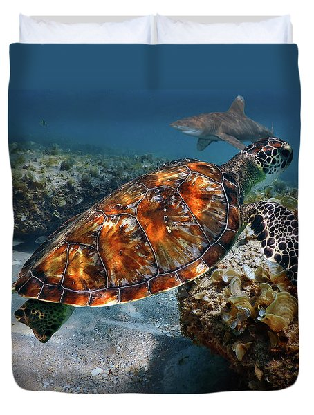 Turtle And Shark Swimming At Ocean Reef Park On Singer Island Florida Duvet Cover by Justin Kelefas