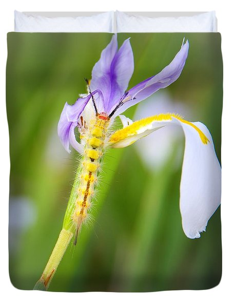 Tussock Caterpillar And Fairy Iris Duvet Cover by Richard Rizzo