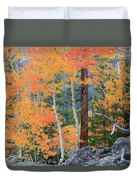 Duvet Cover featuring the photograph Twisted Pine by David Chandler