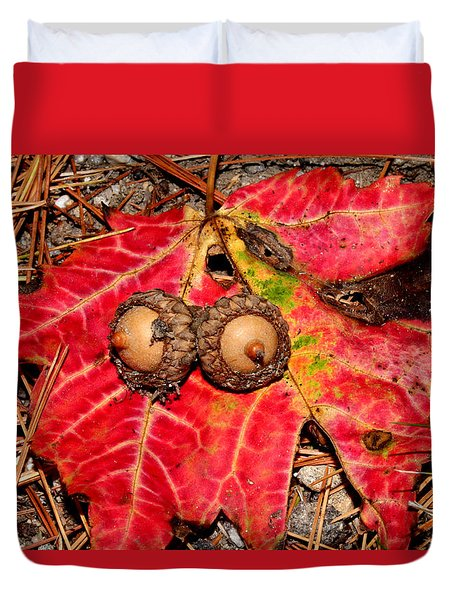 Two Acorns On Tatterd Maple Leaf Duvet Cover by Robert Morin