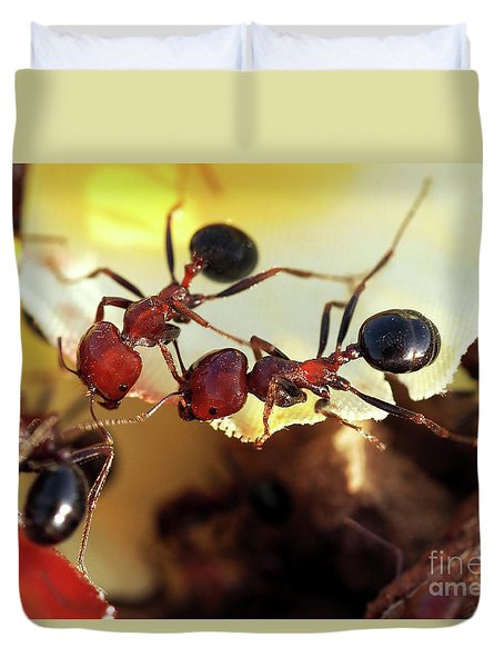 Two Ants In Sunny Day Duvet Cover