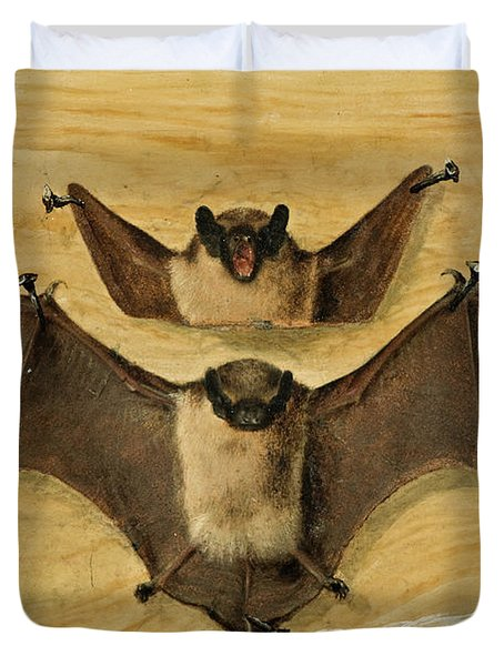 Two Bats Nailed To A Timber Wall, Knife And Quill Pen Duvet Cover