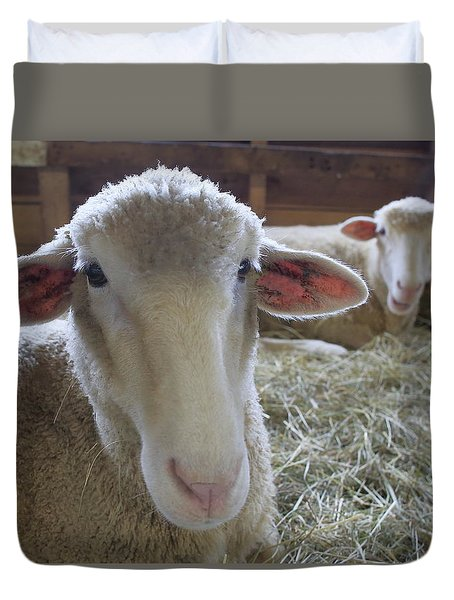 Two Funny Sheep In A Barn Duvet Cover
