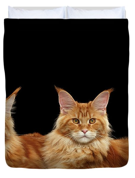 Two Ginger Maine Coon Cat On Black Duvet Cover
